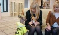 DOG and CAT, sunu kirpykla Vilniuje, kaciu kirpykla Vilniuje