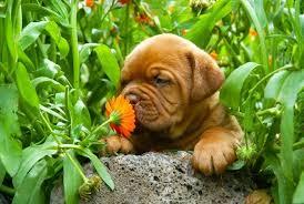 suns kvapas